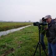 Arno Mohl iz WWF Austrije promatra jata migrirajućih sivih gusaka u Kopačkom ritu